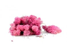 Varie - Muschio Finlandese Lichene Rosa Gr.200 - un prodotto unico di raffasupplies su DaWanda