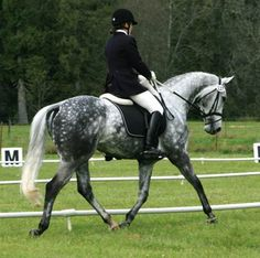 This horse is for sale. [[MORE]] Handsome Dapple Grey Dressage geldingLocation:Eatonville Washington 98328 Related Searches by State Breed:Thoroughbred Related Searches by Breed Date Foaled:JUN...