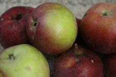 12 Awesome Apple Recipes to Get You Through Fall from theadventuresofnutrigirl.wordpress.com