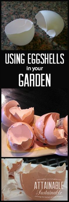 Eggshells are a great addition to your gardening plans. Here's how to incorporate them into your vegetable garden to boost soil, deter pests, and (hopefully! Garden ~ prepping ~ homestead ~ grow your own ~ seeds ~ vegetables Front Garden Landscape, Garden Landscaping, Landscaping Ideas, Organic Vegetables, Growing Vegetables, Garden Soil, Garden Beds, Potager Garden, Fruit Garden