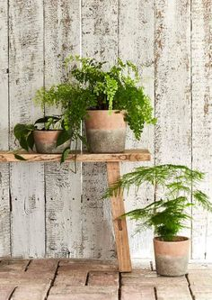 These terracotta pots are just delicious! There is something utterly magical about the combination of the weathered terracotta look when combined with the fresh