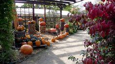 Pumpkin, Outdoor, Outdoors, Pumpkins, Outdoor Games, Squash, The Great Outdoors