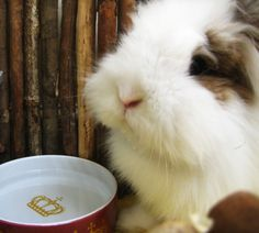 Bunny's water bowl is fit for a king - March 27, 2013