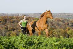 Take your horse for a walk or jog :-)