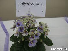 Выставка фиалок и геснериевых 25-26 апреля 2014 года в Columbus, OH, USA   Fialki.ru, фиалки (сенполии)