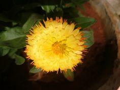 I love my garden -Aashita#myclicks#