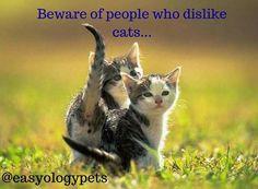 Beware of who dislike cats! @easyologypets
