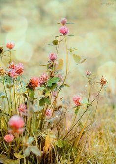 27 new ideas spring nature photography flowers ana rosa Meadow Flowers, Wild Flowers, Beautiful Flowers, Beautiful Pictures, Spring Flowers, Flowers Gif, Exotic Flowers, Beautiful Life, Fresh Flowers