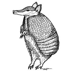 Standing Armadillo by Karl Addison