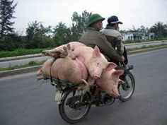 Taking them pigs for a ride - Imgend I have to ask---how did they not pop their tires!