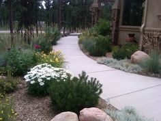 Xeriscape with Entry Walk Plantings