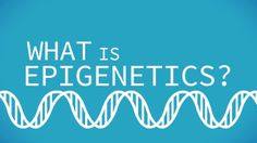 What is Epigenetics?. What is Epigenetics?  Watch this video infographic to find out!   This video was lovingly and meticulously crafted by ...