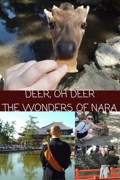 Nara is just a day trip from Osaka and is the perfect family outing! Filled with hundereds of cute deer just walking around and a gorgeous temple surrounded by a lake and gorgeous landscapes!
