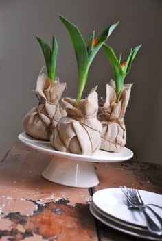 wrap bulbs and soil in canvas and string for a rustic looking centerpiece. Don't forget to put a plate underneath to catch any moisture!