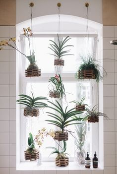 A lovely alternative idea for displaying plants - hang them in a window!