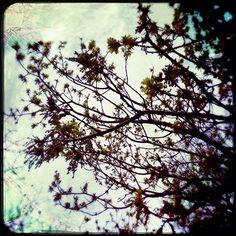 Jane Wheeler's Blog april17_0810
