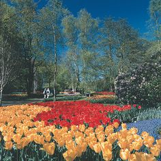 Sticking with our botanical themed week to celebrate our first year at the Chelsea Flower Show I thought I'd share this lovely tulip pic with you of Keukenhof Gardens, Amsterdam. How are your gardens doing with this lovely sunshine we're having?