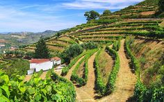 The top 5 food and drink holidays in Portugal | Via The Telegraph Travel | 5/01/2015 Our experts' pick of the top five food and drink holidays in Portugal for 2016, including wine tasting, foodie tours and traditional Portuguese cookery classes, in destinations such as Porto, the Douro Valley, Madeira and Lisbon #Portugal