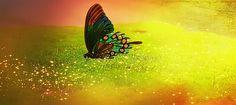 Perhonen, Hyönteinen, Väri, Sammal