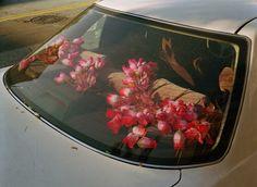 flower car www.glamourmarmalade.com #flower #car