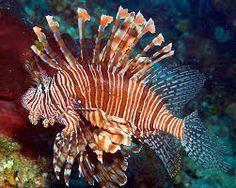 clownfish are part of inagua's fauna