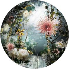 """""""ARCHEUS / edition 4/7,"""" surreal circle floral photograph by artist Ysabel LeMay 