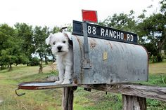 You Got Mail! by Shyann Harker