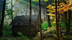 forest house 1 Top 10 Most Beautiful Forest Houses