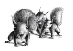 pencil drawing of squirrel | ... Karikatur/Caricature - Satire - Zeichnung/Drawing - Malerei/Painting