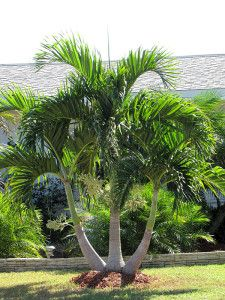 Ideas Palm Tree Garden Ideas Backyards Landscape Design The Eff Tropical Backyard Landscaping, Palm Trees Landscaping, Florida Landscaping, Landscaping With Rocks, Front Yard Landscaping, Palm Trees Garden, Small Palm Trees, Christmas Palm Tree, Grinch Christmas