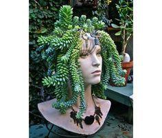 DIY succulent garden in a mannequin head