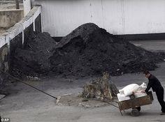 Grim: A North Korean man pushes a wheelbarrow past a pile of coal in Pyongyang.