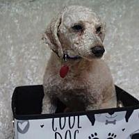Pet Card Dachshund Rescue Dachshund Adoption Dog Adoption