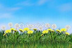 Yellow Dandelion, green grass and light blue sky, Spring landscape, Poster, Wallpaper, web banner. Realistic Digital illustration. Template background, pattern.