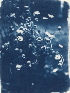 'Mom's Garden' Cyanotype Print by erin hall Sun Prints, Bold Prints, Cyan Blue, Blue Art, Deep Blue, History Of Photography, Art Photography, Alternative Photography, Photo Processing