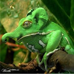 Elephant Frog - what marvellous and bizarre hybrids can be conceived through photo editing software. Interesting Animals, Unusual Animals, Rare Animals, Animals And Pets, Funny Animals, Beautiful Creatures, Animals Beautiful, Frosch Illustration, Photoshopped Animals