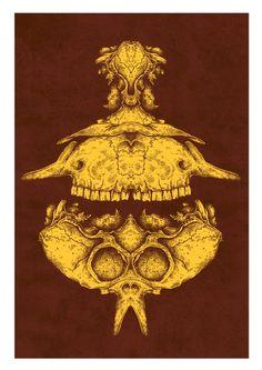 Skull  www.sam-dunn.com