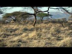 I'm in Love With You - Kari Jobe - Lyric Video. Een prachtig lied over de liefde voor God. Enjoy!