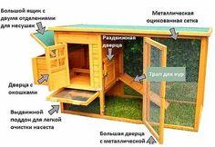схема курятника на 10 кур: 13 тыс изображений найдено в Яндекс.Картинках