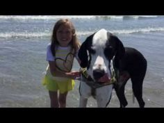 Great Dane helps girl with bone disease walk again, adults watching online videos cry again. | Animals | Someecards