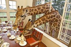 Photographer Shares Breakfast with Giraffes in Kenya - My Modern Metropolis