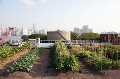 I am quite taken by this New York rooftop farm.  photo by Todd Selby via theselby.com pinned by @dakwaarde