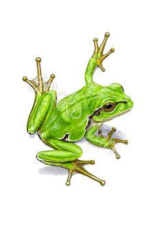 Limited edition tree frog print HA06 by GeckomanArt on Etsy