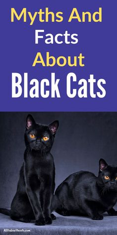 Are black cats lucky? Discover some of the popular myths and facts surrounding these beautiful felines Black Cat Breeds, Interesting Facts About Yourself, Cat Body, Black And White Tuxedo, Cat Perch, Egyptian Goddess, Cat Behavior, Cat Facts, Black Cats