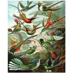 Jurassic World, Jurassic Park, Ernst Haeckel Art, Natural Form Art, Science Illustration, Paint By Number Kits, Vintage Art Prints, Vintage Decor, Framed Prints
