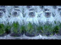 Orkide Yetiştiriciliği / Orkide Üretimi / Orkide Çoğaltılması / yenibiriskurmak.com - YouTube