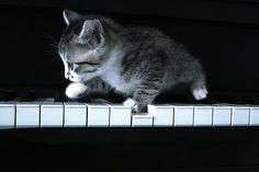 cat, cute, kitty, own, piano - inspiring picture on Favim.com