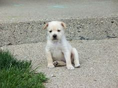 Hi my name is Fiona. I'm available for adoption through POET animal rescue. We're on facebook! www.facebook.com/POETAnimalRescue