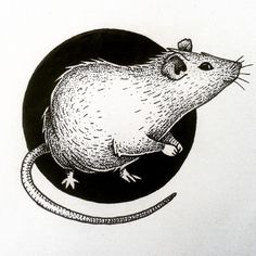 #rat #drawing #tattooidea #illustration #circle #mouse #blackandwhite #tattoo…