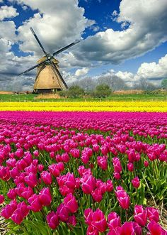 Tulips(tulpen) in de Keukenhof/Lisse/ Noord Holland Netherlands Tourism, Holland Netherlands, Holland Europe, Visit Holland, Haarlem Netherlands, Amsterdam Holland, Places To Travel, Places To See, Travel Destinations